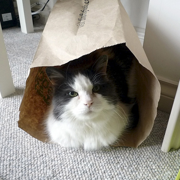 1. He loved Thrifty's brown bags too