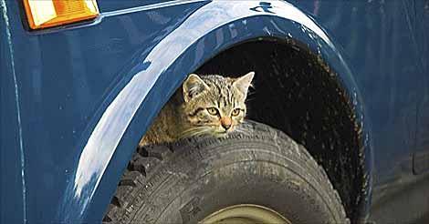 cat in wheel well