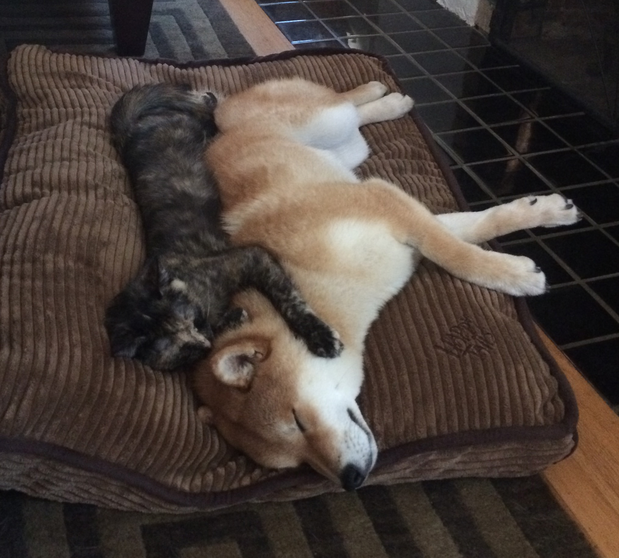 Nala Aiofe with dog