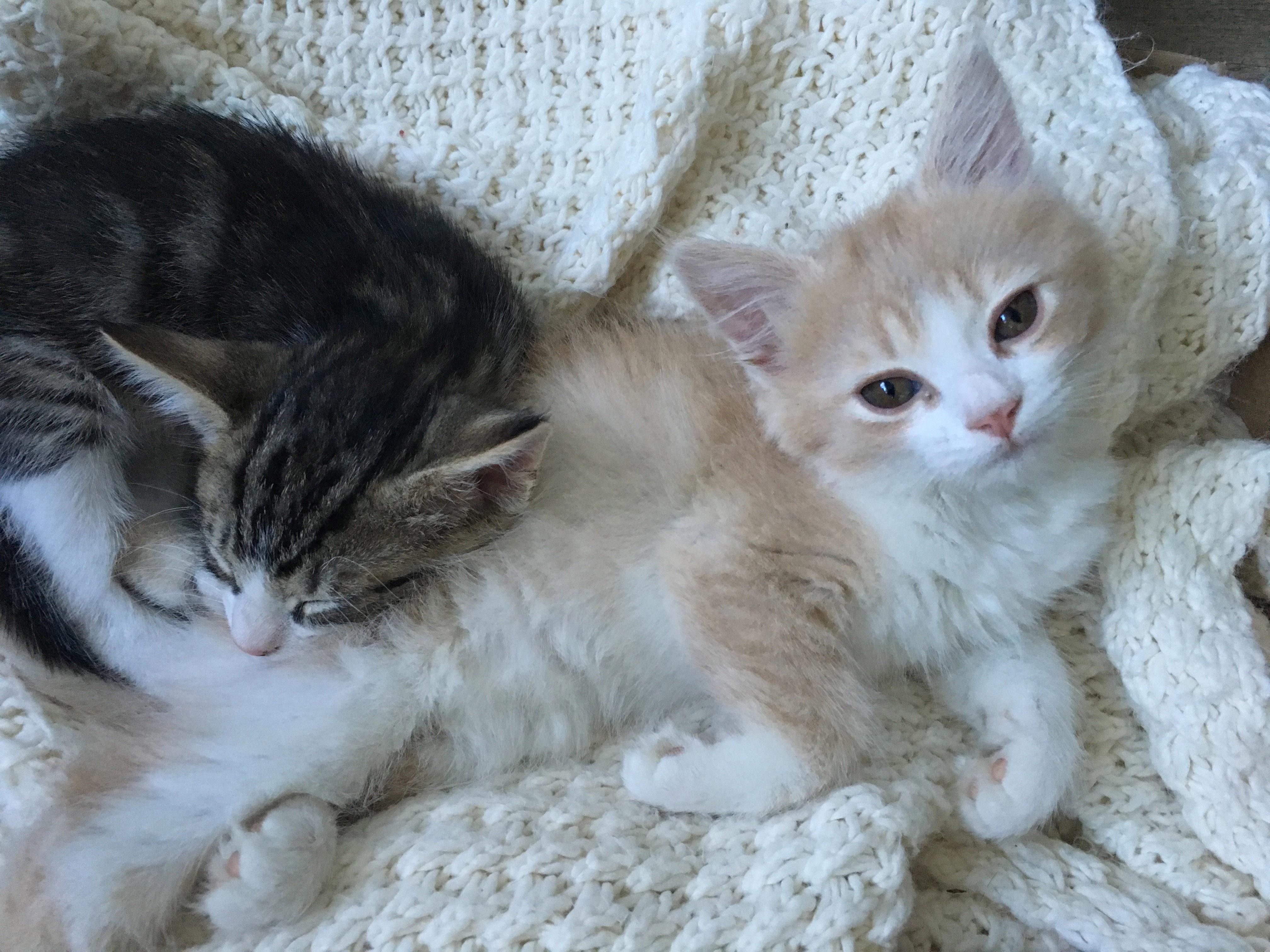 Oliver and Nita 3