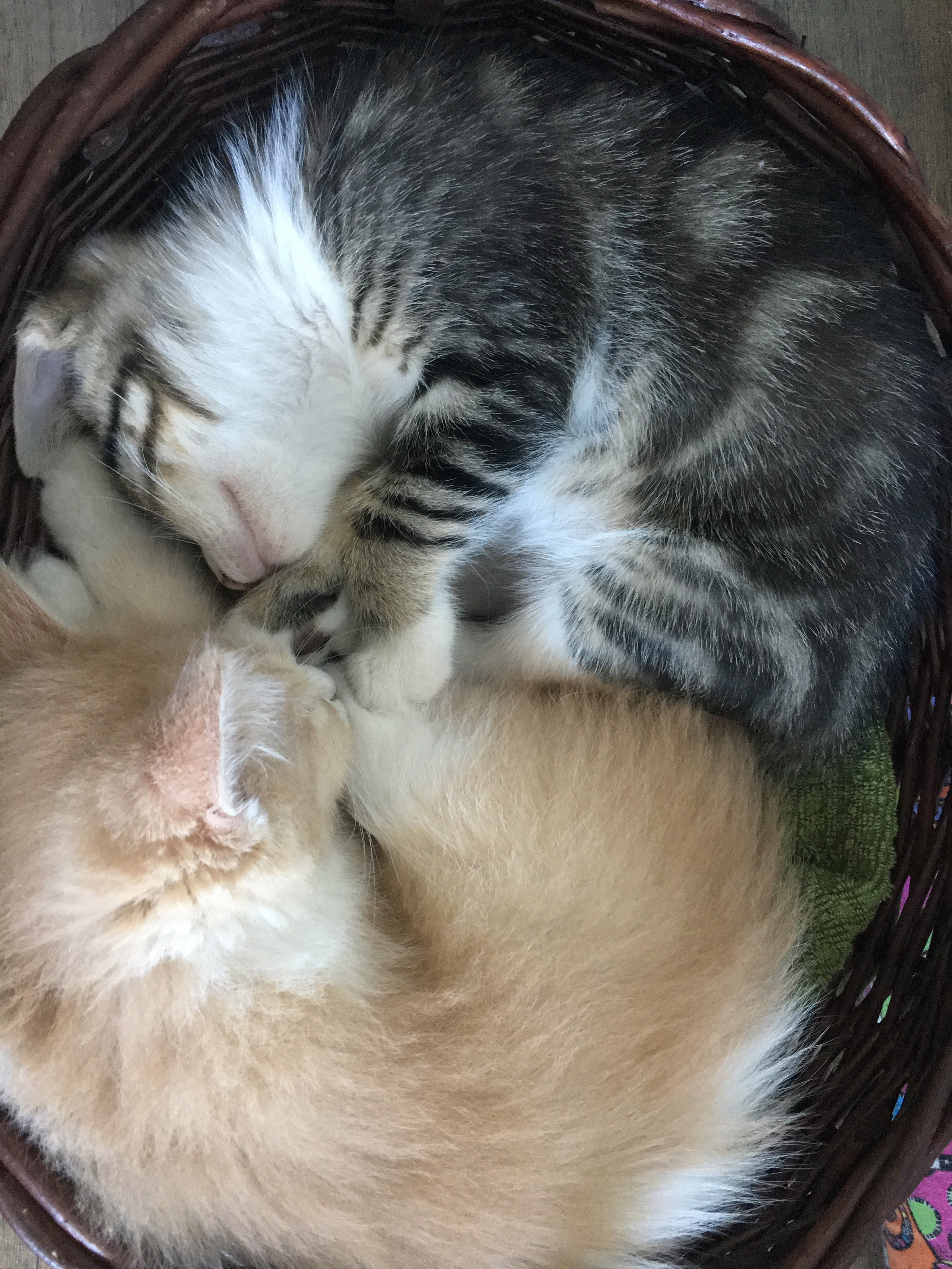 Oliver and Nita