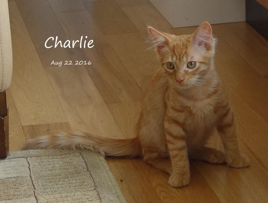 Charlie_2