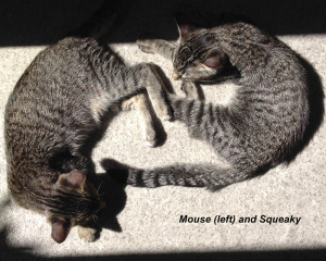 squeaky_and_mouse