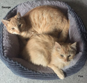 george_and_fox