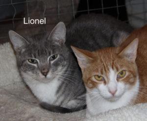 Lionel_1