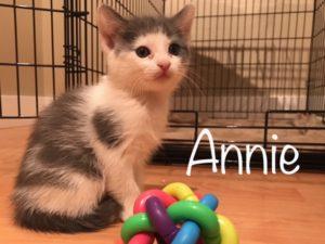 Annie_1