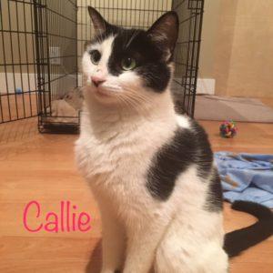 Callie_1