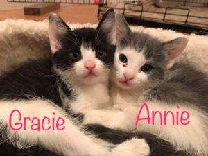 Gracie_Annie_1