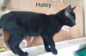 Haley_1