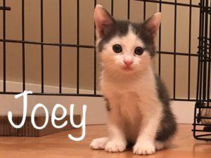 Joey_2