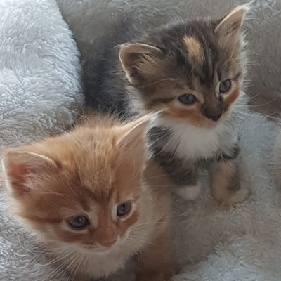 kittens_0