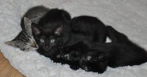 kittens_7_all_2
