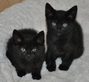 kittens_7_black_1
