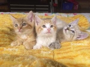 3_kittens
