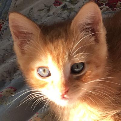 Ginger_Snap_0