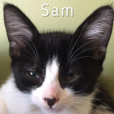 Sam_0