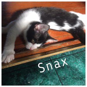 Snax_1