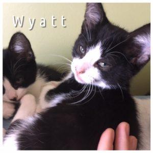 Wyatt_1