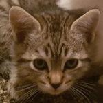 patricia_kitten_0