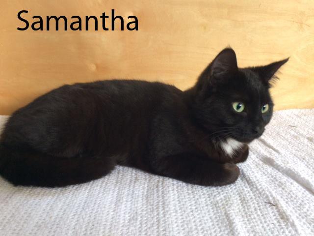 Samantha_1