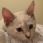 Alley_Cat_0