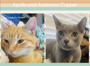 Apollo_Anderson_1