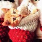 Christmas_kittens_0